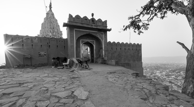 Frankieboy Photography |  Jaipur India
