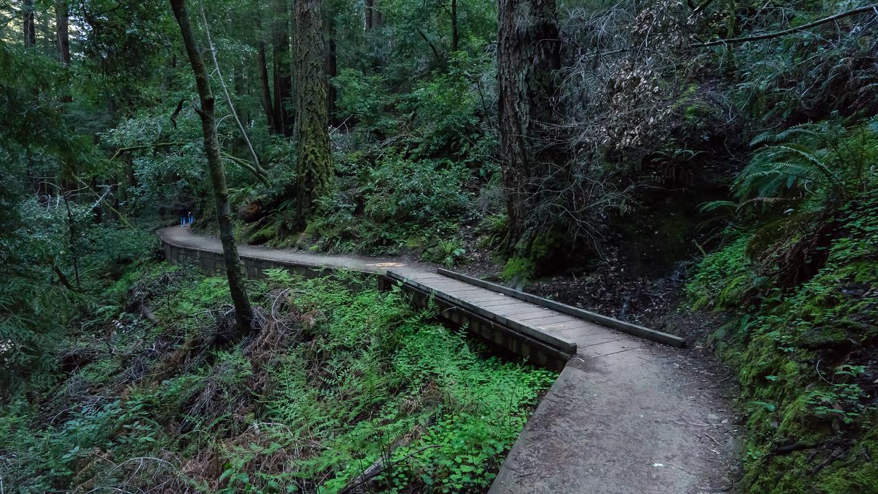 Epic Muri Woods