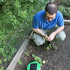 """Franklin Robotics in Billerica is developing a solar-powered weeding robot for home gardens which they are calling The """"Turtill."""" CEO and Founder Rory MacKean shows off how the robot works in a garden just outside their office. SUN/JOHN LOVE"""