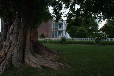 The Carnton Tree