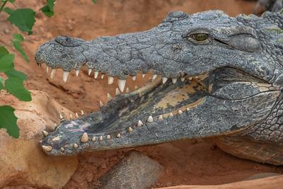 La Ferme Au Crocodiles