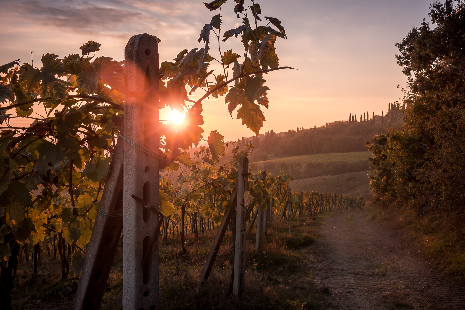 Sunrise on Tuscany Winefields