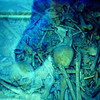 WW { carnal house.  As bones were found over the years they were put in a open monument