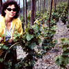here are the szme loops in pruning a little later in the season.  Shirley Antrobus 1976