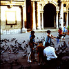 1967  The Piazza Dei Signori with Craig, Fred and Christine feeding the peogens.