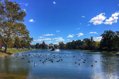 Ducky Armada
