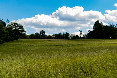 A field of maturing grass blows gently in the warm, spring air near Thurmont, Maryland