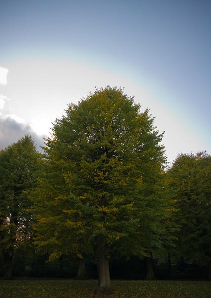 Efterår - Fall