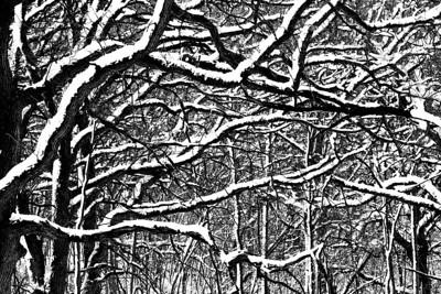 015-tree_winter-wdsm-24dec12-9243