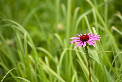 clip-015-flower-wdsm-10jun12-003-6624