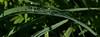 015-dew_drops-wdsm-01jun16-851x315-007-9549