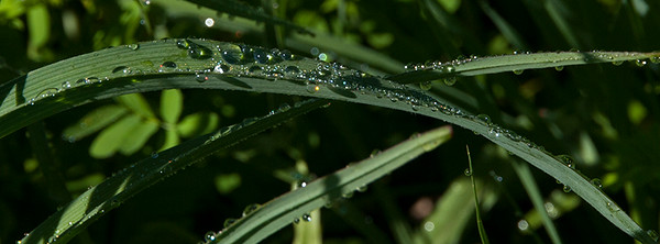 015-dew_drops-wdsm-01jun16-851x315-007-9549