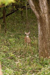 clip-015-deer-wdsm-01oct10-8420