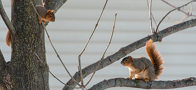 015-squirrel-wdsm-07jan18-850x390-007-3458