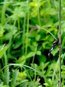 clip-015-dragonfly-wdsm-08jun10-cvr-4260