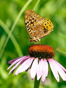 clip-015-butterfly-wdsm-24jun12-001-6908