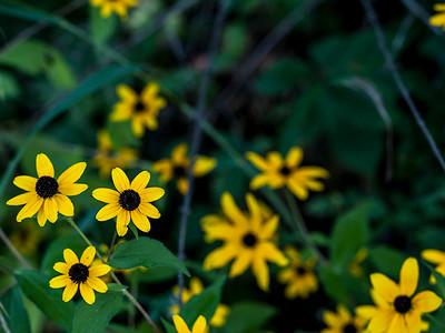 clip-015-flowers-wdsm-31aug14-002-9222