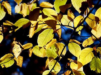 clip-015-leaves_autumn-dsm-02oct12-002-8496