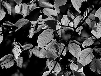 clip-015-leaves_autumn-dsm-02oct12-002-bw-8496