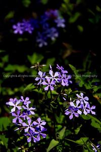 clip-015-wildflower-wdsm-10may18-007-150-4630