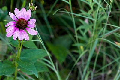 flower-wdsm-24aug15-18x12-003-4537