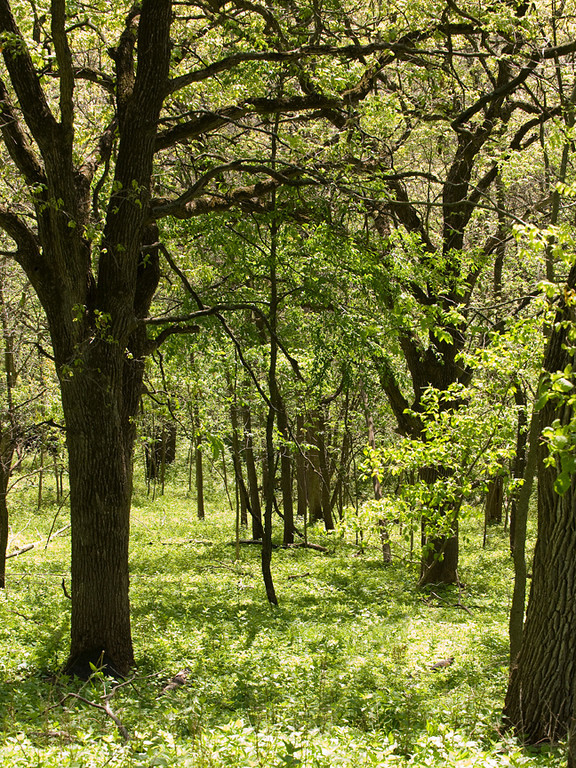 clip-015-landscape_forest-wdsm-23apr12-001-5355