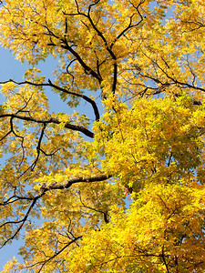clip-015-tree_autumn-dsm-02oct12-001-8499