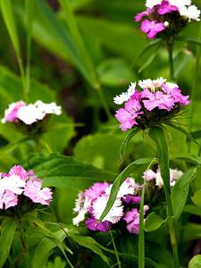 clip-015-flower-wdsm-01jun13-0820
