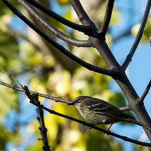 clip-015-bird-ankeny-02oct16-006-6002