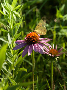 clip-015-butterfly-wdsm-06jul16-09x12-001-0144