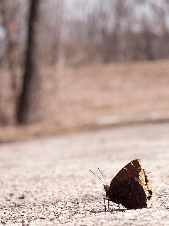 015-butterfly-wdsm-31mar13-9954