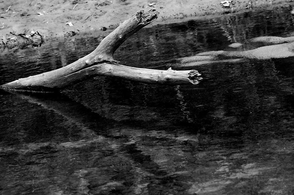 015-driftwood-wdsm-07apr13-9986