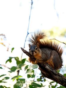 clip-015-squirrel-wdsm-22sep12-001-8347