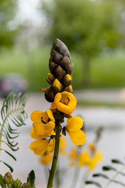 clip-015-flower-wdsm-30aug16-004-1169