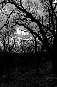 015-tree_sky-wdsm-21apr13-0538