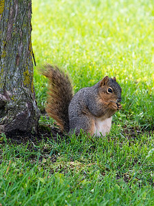 clip-015-squirrel-wdsm-22may17-09x12-001-9218
