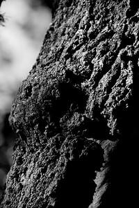 clip-015-tree_bark-wdsm-09jul10-bw-5874