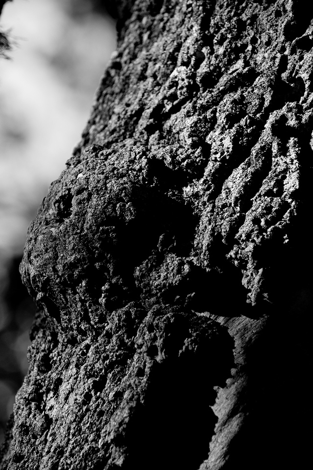 clip-015-tree_bark-wdsm-09jul10-bw-5874