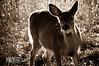 deer14-2