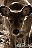 deer28-2
