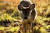 deer24
