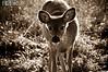 deer24-2