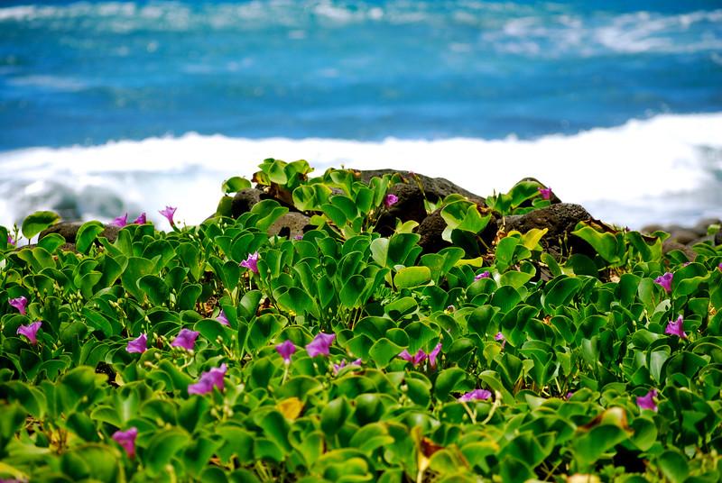 Pololu, Big Island, Hawaii