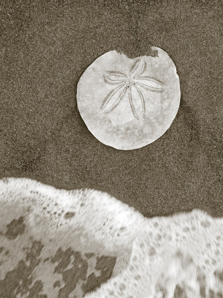 "Seashore Discovery - sand dollar on beach.   The ""XLarge"" and smaller photo sizes are FREE for any personal use (under a <a href=""http://creativecommons.org/licenses/by-nc-nd/2.0/"">Creative Commons</a> license). Click the ""Buy"" or shopping cart button (above the image) to purchase prints or downloads. PRICING: 1-megapixel Personal downloads are $4.95; 4-megapixel Personal downloads are $49.95; 1-megapixel Commercial downloads are $49.95, 4-megapixel Commercial downloads are $199.95; NOTE: Free personal use requires a photo credit to my company, ''<a href=""http://www.tssphoto.com/"">The Stock Solution</a>'', and link to that Web site if you use the image on a personal Web site."
