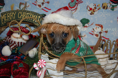 2012 Free Pets From TexasTeacups