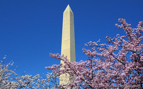Free Washington DC Screensaver Images