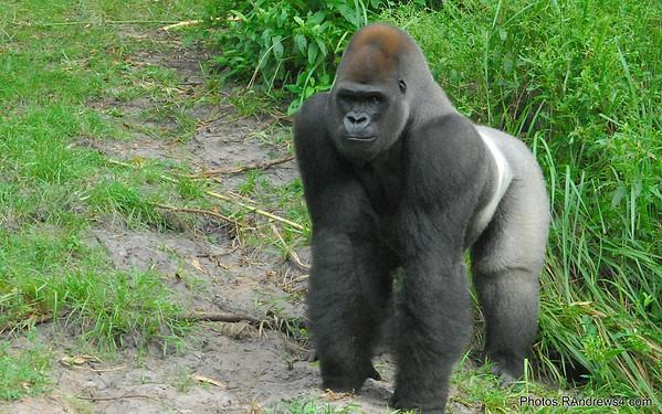 Free Wildlife Screensaver Images