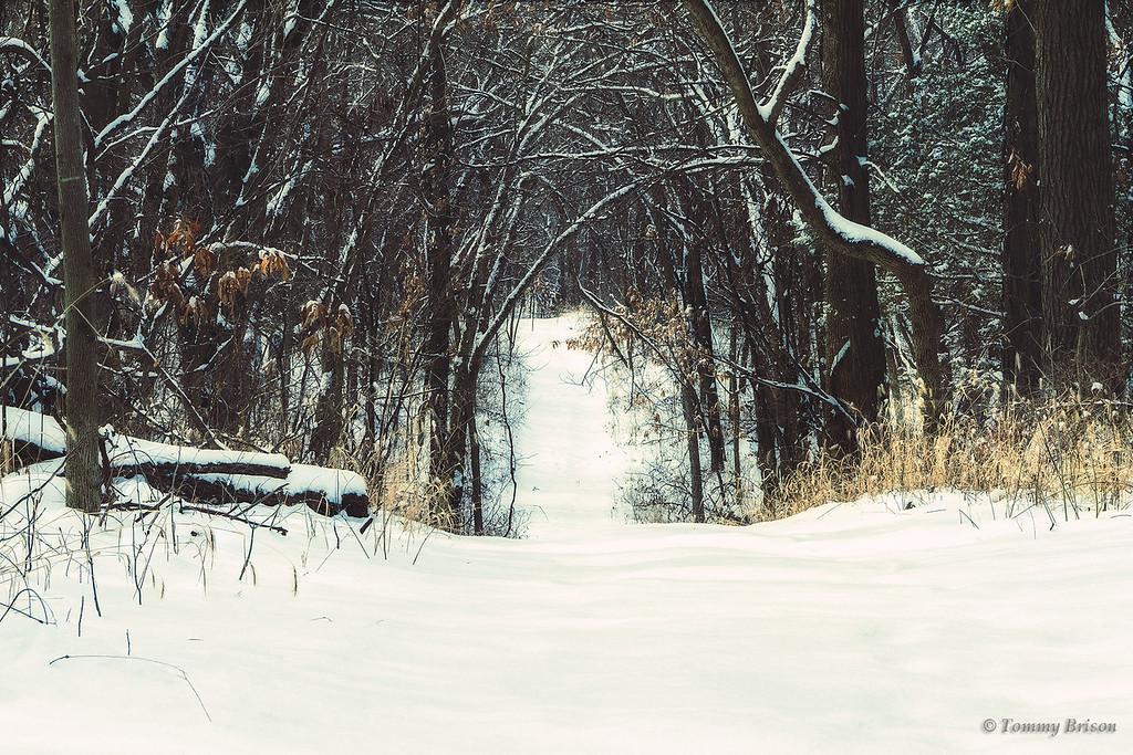 Missouri Landscape Photography Burr Oak Woods Conservation 030115