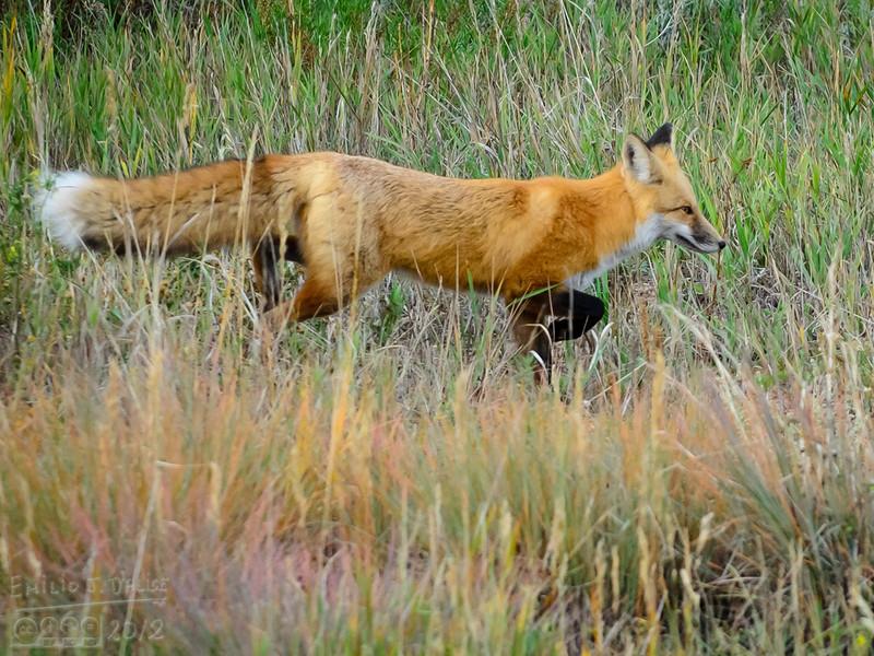 Woodland Park, Colorado - Summer of 2012