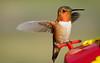 Hummingbird on feeder - Summer of 2012